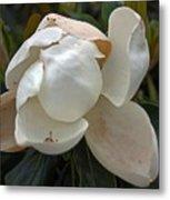 Magnolia No 1 Metal Print