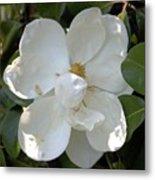 Magnolia No 7 Metal Print