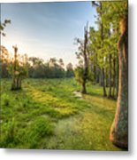 Magnolia Plantation Cypress Swamp Sunrise Metal Print