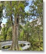 Magnolia Plantation Cypress Tree Metal Print