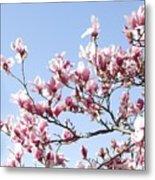 Magnolia Tree Against Blue Sky Metal Print