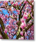 Magnolia Tree Beauty #3 Metal Print