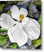 Magnolia Tree Flower Metal Print