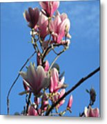 Magnolias And Blue Skies - Springtime In The Valley Metal Print