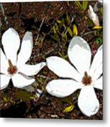 Magnolias Dp3854 Metal Print