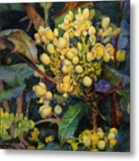 Mahonia Morning  Metal Print