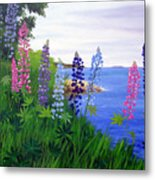 Maine Bay Lupine Flowers Metal Print