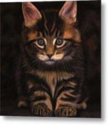 Maine Coon Kitty Metal Print by Sabine Lackner