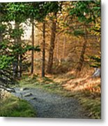 Maine Forest At Dusk Metal Print