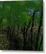 Maine Forest Metal Print
