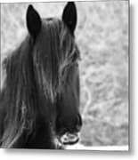 Majestic Beauty Bw Metal Print
