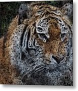 Majestic Bengal Tiger Metal Print