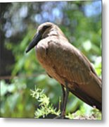 Majestic Bird Metal Print
