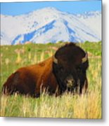 Majestic Buffalo  Metal Print