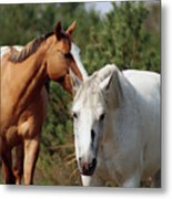 Majestic Horse Ride Metal Print
