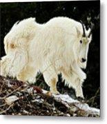 Majestic Mountain Goat Metal Print