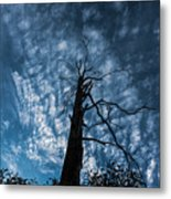 Majestic Nature On Beauty In Death Metal Print