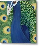 Majestic Peacock Metal Print