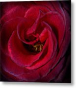 Majestic Rose Metal Print