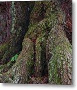 Majestic Tree Trunk Metal Print