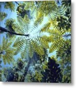Majestic Treeferns Metal Print