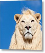 Majestic White Lion Metal Print by Sarah Cheriton-Jones