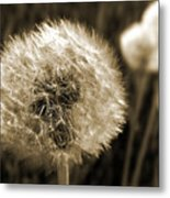 Make-a-wish Dandelion Sepia Metal Print