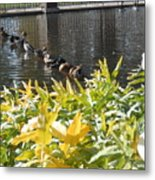 All My Ducks In A Row Metal Print