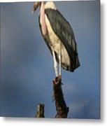 Malabu Stork  Metal Print