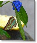 Malachite Butterfly Metal Print