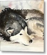 Malamute At Rest Metal Print