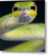 Malayan Vine Snake Metal Print