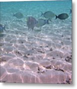 Maldives School Of Tropical Fish Metal Print