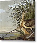 Male And Female Long Billed Curlew Metal Print