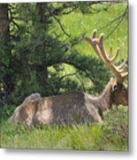 D10271-male Elk 2  Metal Print