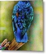 Male Fairy Bluebird Metal Print