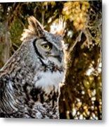 Male Great Horned Owl Portrait Metal Print
