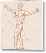 Male Human Anatomy Metal Print