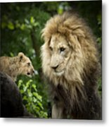Male Lion And Cub Metal Print