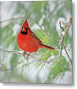 Male Northern Cardinal In Winter Metal Print