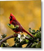 Male Northern Red Cardinal Metal Print