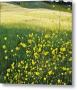 Malibu Creek Wildflowers Metal Print