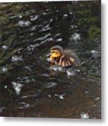 Mallard Duckling Metal Print
