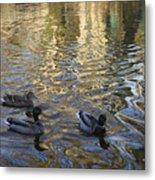 Mallard Ducks On The Canal #1107 Metal Print