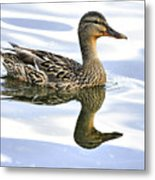Mallard Reflections Metal Print