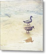 Mallards At The Chattahoochee River Metal Print