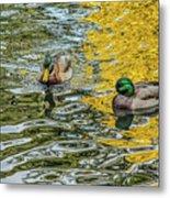 Mallards On Golden Pond 3 Metal Print