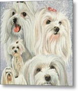 Maltese Collage Metal Print