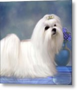 Maltese Dog Metal Print