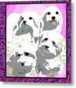 Maltese Group Metal Print